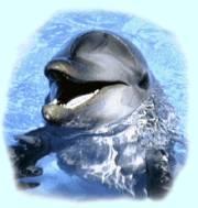 golfinho03_p.jpg